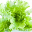 Green salad on white background - Stock Photo