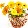 Wicker basket with yellow flowers - marigolds — Stock Photo #22823464