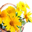 Yellow marigold close up, bouquet in the basket — Stock Photo