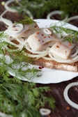 Herring fillet with onions and dill on a plate — Stockfoto