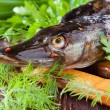Purified pike on the board and greens — Stock Photo