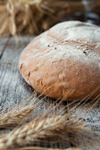 Round loaf grain bread and wheat ears — Stock Photo