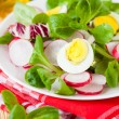 Fresh salad of radish and greens, eggs - ストック写真