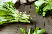 Large bunch of Chinese leaf cabbage, pak choi — Stock Photo