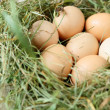 Fresh eggs in the nest — Stock Photo