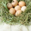 Fresh chicken eggs in the nest — Stock Photo