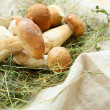 Pile of porcini mushrooms on hay — Stock Photo