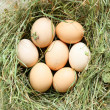Fresh eggs in a nest of hay, top view — Stock Photo