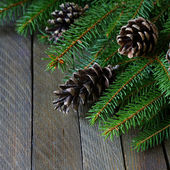 Spruce branches and cones — Stock Photo