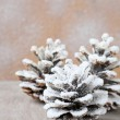 Pine cones covered with artificial snow — Stock Photo
