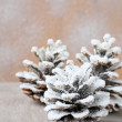 Stock Photo: Pine cones covered with artificial snow