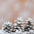 Background with snow-covered pine cones — ストック写真