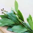 Dry leaves laurel tree, seasoning — Stock Photo #37809621