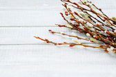 Blossoming willow twigs on the boards — Stock Photo