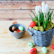 Stock Photo: White crocus blooming and Easter eggs