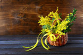 Bouquet of spring mimosa — Stock Photo
