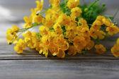 Small yellow flowers — Stock Photo