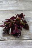 Fragrant purple basil leaves — Stock Photo