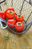 Red tomatoes in basket, harvest — Stock Photo