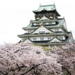 Osaka castle with sakura blossom in Osaka, Japan — Stock Photo