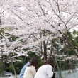 Japanese girls relaxing under sakura blossom trees — Stock Photo