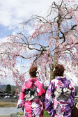 Japanese girl in traditional dress called Kimono with Sakura blo — Stock Photo