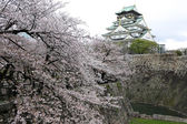 Osaka castle with sakura blossom in Osaka, Japan — Stockfoto