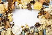 Quadro de flores secas — Fotografia Stock