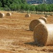 Stock Photo: Packed roll of hay on field
