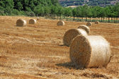 Packed roll of hay on a field — Stock Photo