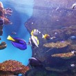 Acquarium with submarine life — Stock Photo