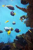 Acuario con vida submarina — Foto de Stock