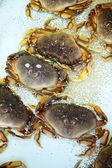 Krabben in een aquarium — Stockfoto