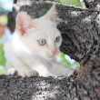 Small cat in the tree — Stock Photo