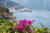 Flowers in the Amalfi Coast, Italy — Stock Photo