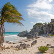 Tulum ruins, Mexico — Stock Photo #41885867