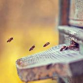 Bee in flight, hive — Stock Photo