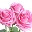 Roses bunch — Stock Photo