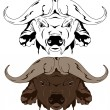 Buffalo — Stock Vector
