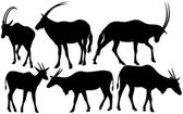 Antelopes silhouettes — Stock Vector