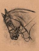 Horse head — Stock Photo