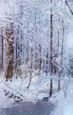 Winter fairy tale — Stockfoto