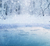 Winter forest lake — Stockfoto