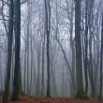 forêt effrayant — Photo