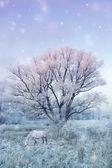 Зимняя природа — Стоковое фото