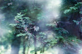 Mystery forest — Stock Photo