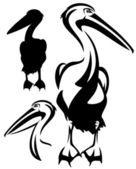 Pelican — Stock Vector