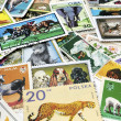Postage stamps with images of flora and fauna — Stock Photo