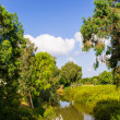 View of summer park Yarkon — Stok Fotoğraf #18342227