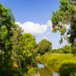 图库照片: View of summer park Yarkon